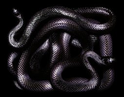 Art of the Serpent - Guido Mocafico